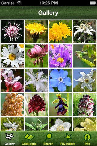 Alpineflower Finder Identify The Wild Flowers Of The Alps 1 0 0 Flowers Alpine Flowers Wild Flowers