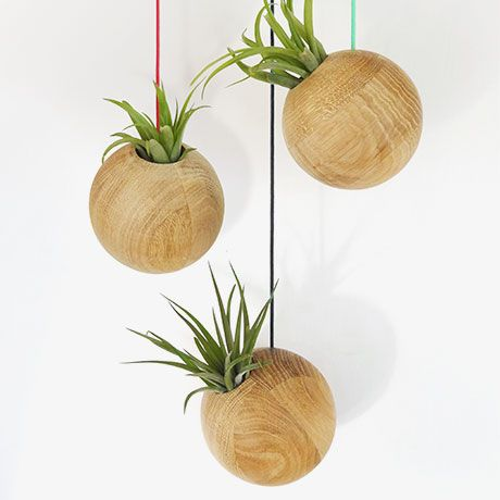 Hanging Sphere + Plant - Green - by Etairnity Airplants #MONOQI