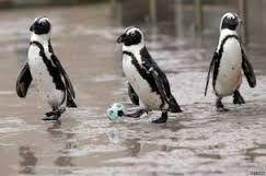 penguins -