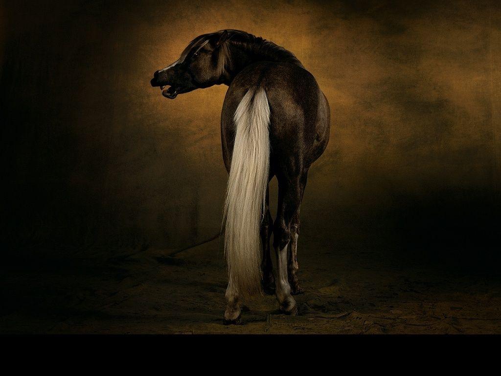 Fond D Cran Gratuit T L Charger Download Free Wallpaper Cheval Arabe Barbe Chevaux Arabes Photos De Chevaux Cheval