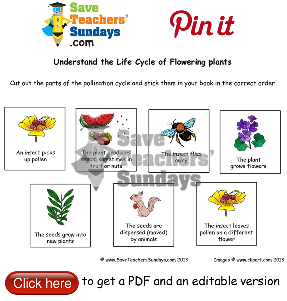 Worksheets Life Cycle Of A Plant Worksheet life cycle of flowering plants worksheet go to httpwww saveteacherssundays