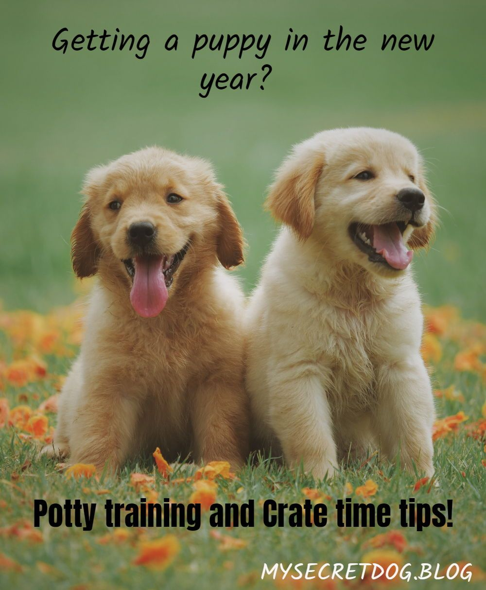Helpful Puppy Potty Training Hacks Chart For Puppy Crate Time