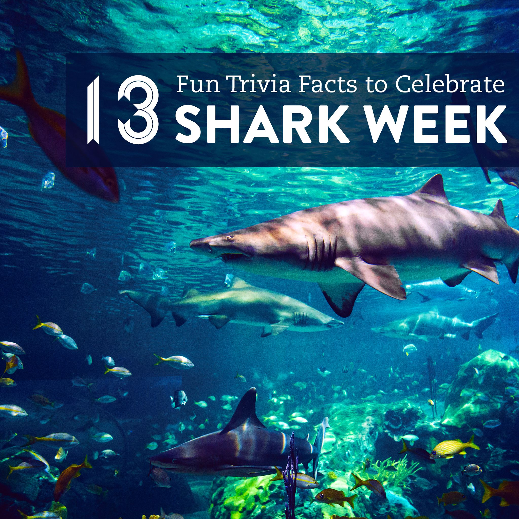 12 Fun Trivia Facts To Celebrate Shark Week