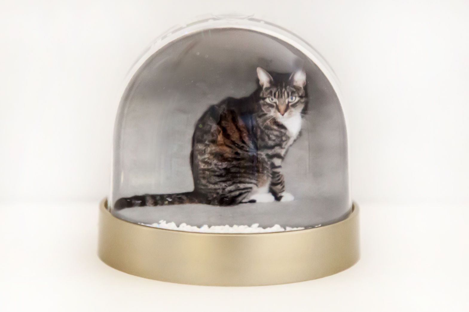Cat Snow Globe Tabby Cat