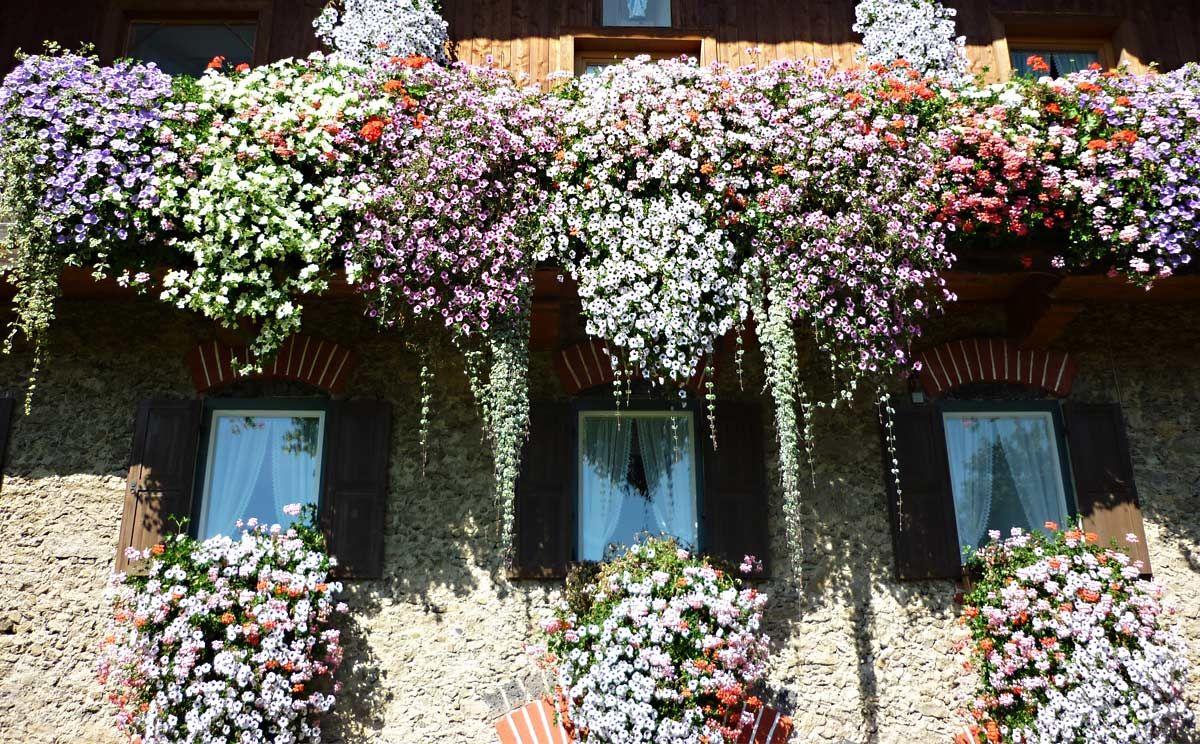 balkonblumen von chr helminger urlaubsregion teisendorf pinterest bayern and beautiful places. Black Bedroom Furniture Sets. Home Design Ideas