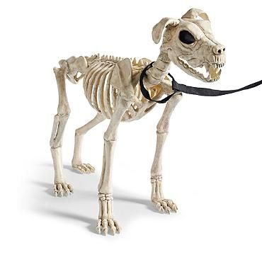 21 12 skeleton dog on leash halloween decorations and decor grandin road