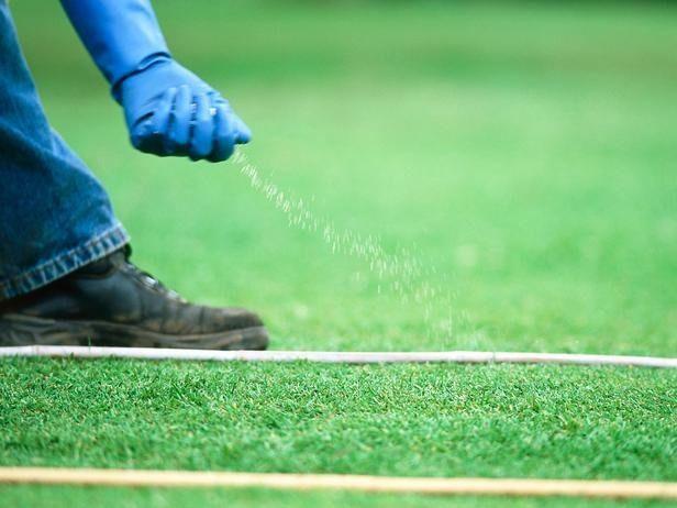 how to fertilize a lawn