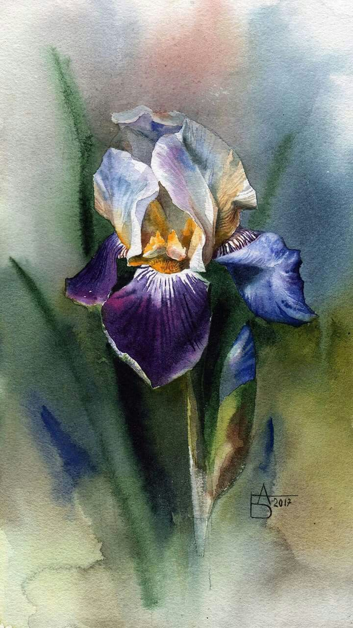 Preciosa acuarela stuff to buy pinterest watercolor iris preciosa acuarela izmirmasajfo