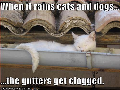 Rains Cats Dogs Funny Animals Funny Animal Photos Dog Jokes