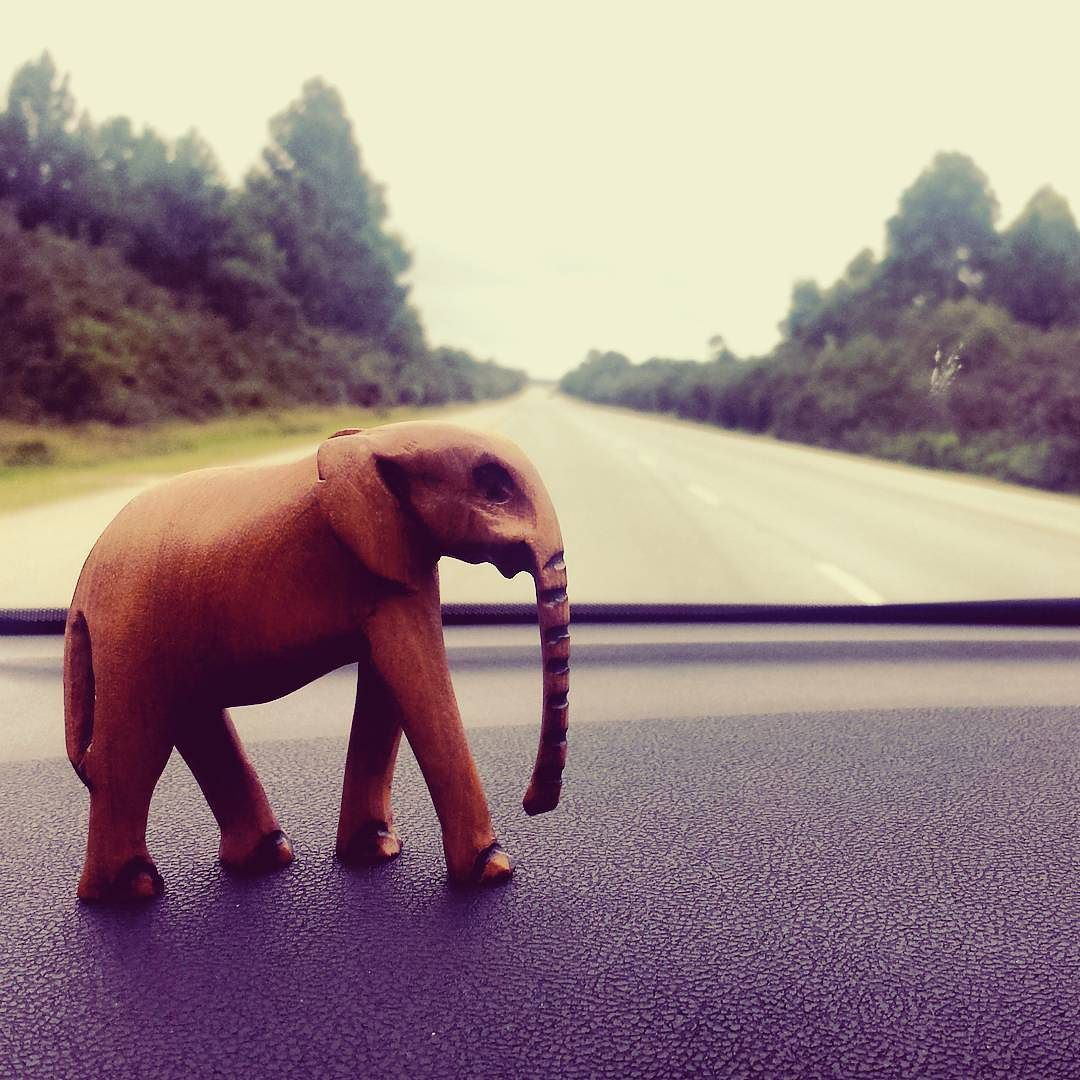 'Walking Big' on the the N2 to Port Elizabeth. Meet Elsie... she's South African and hand made. The newest addition to the Team.  I'm on the hunt for two more team members to join us 'Walking Big' because I really think we could learn alot of these beautiful creatures . #elsie #teamWB  #walkingbig #swaziontour #africa #travel #instatravel #instagoodlife #journeyofaswazi #joas by journeyofaswazi