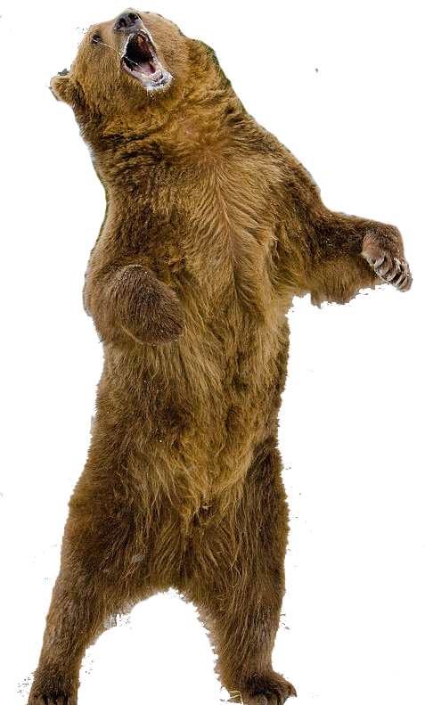Grizzly Standing Png 477 791 Dinosaur Stuffed Animal Animals Painting Crafts