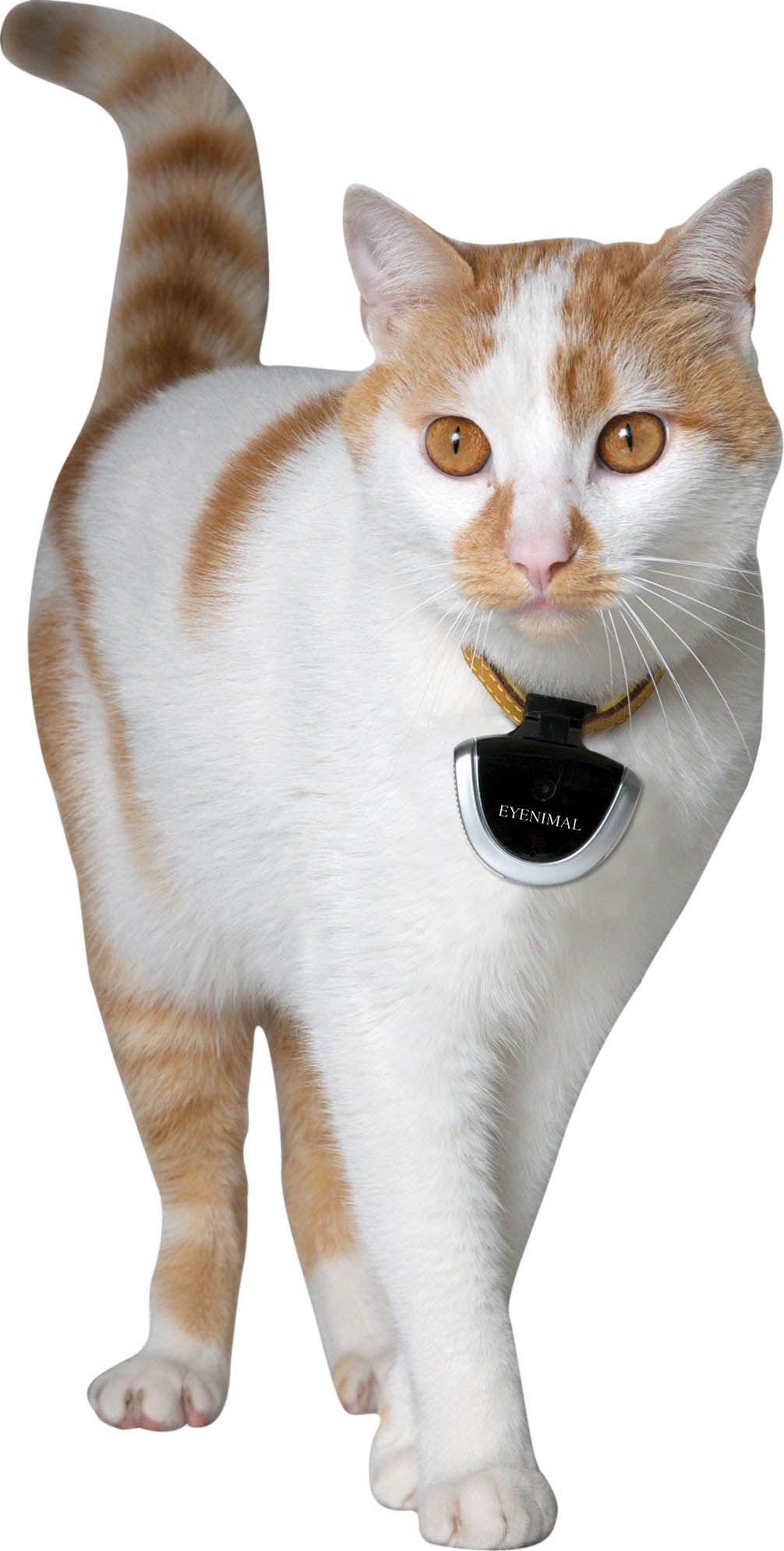EYENIMAL Pet Video Camera » Pet Camera DOGTEK® (With