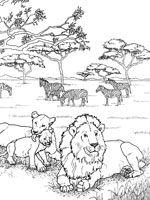 Coloriages Lion Coloriage Lion Lionceau