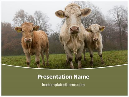 Get this free farm cows powerpoint template with different get this free farm cows powerpoint template with different slides for toneelgroepblik Images