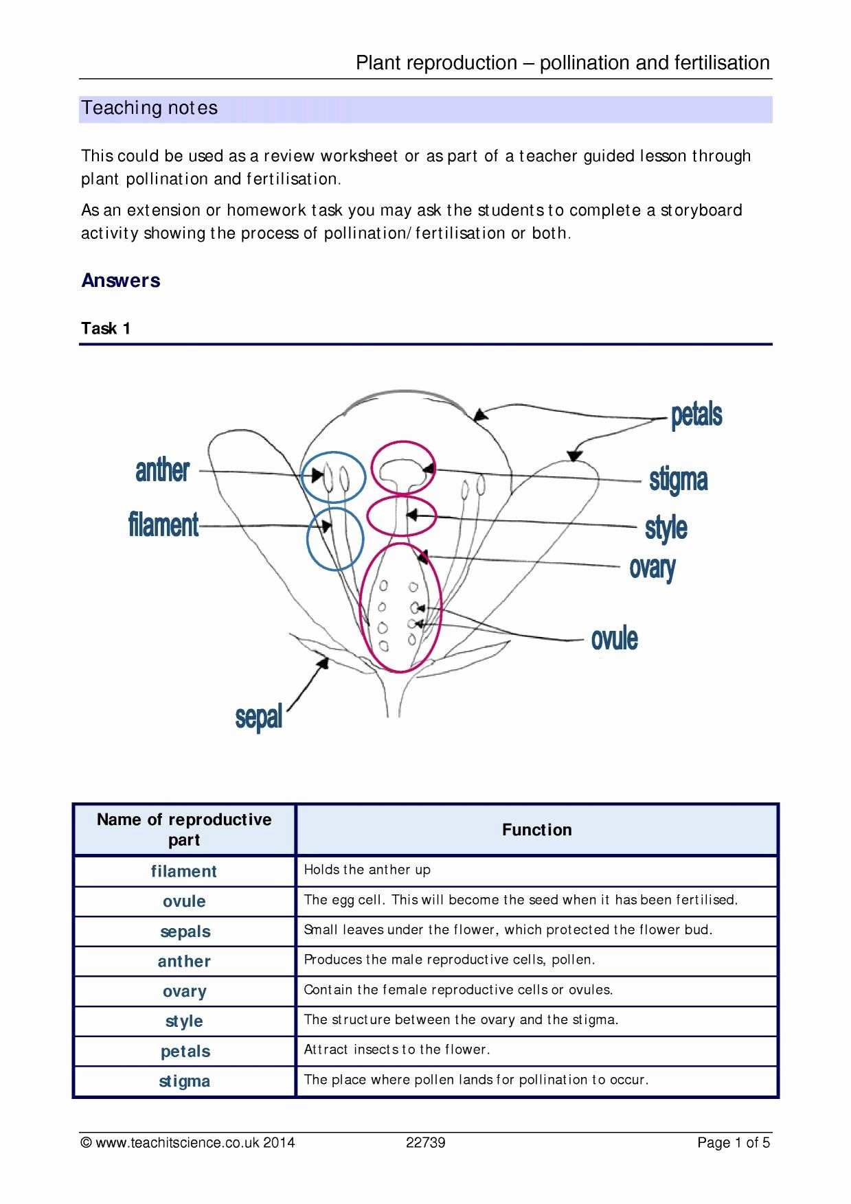 50 Plant Reproduction Worksheet Answers In With