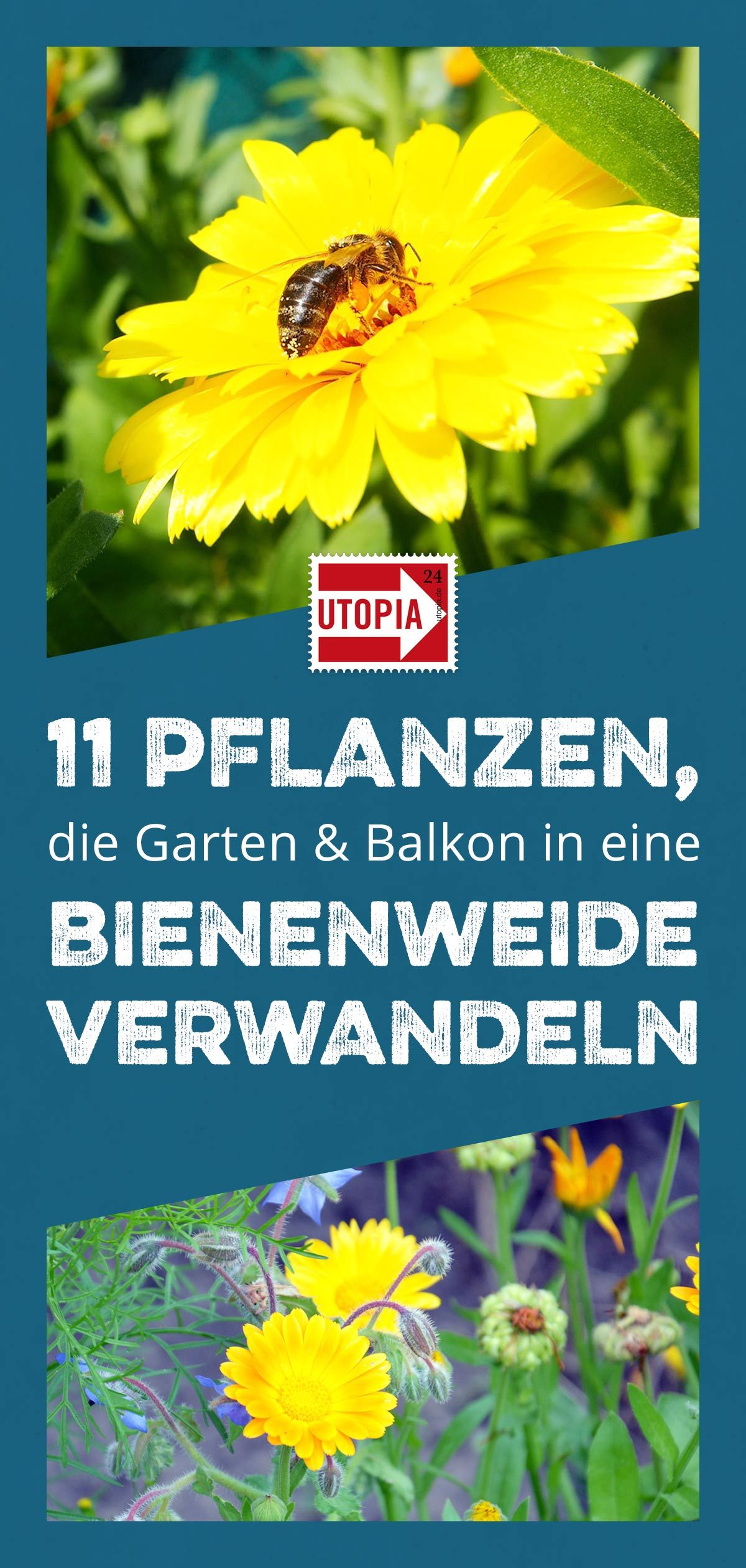Bienenweide 11 Pflanzen Die Deinen Garten Oder Balkon In Ein Bienenparadies Verwandeln Bienenfreundliche Pflanzen Pflanzen Und Garten Pflanzen