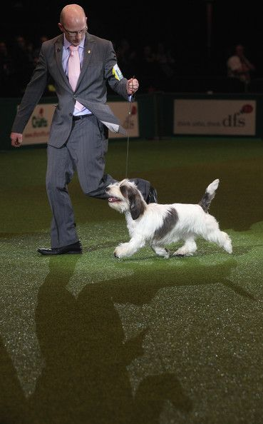 Gavin Robertson Photos Photos Best In Show Announced At Crufts