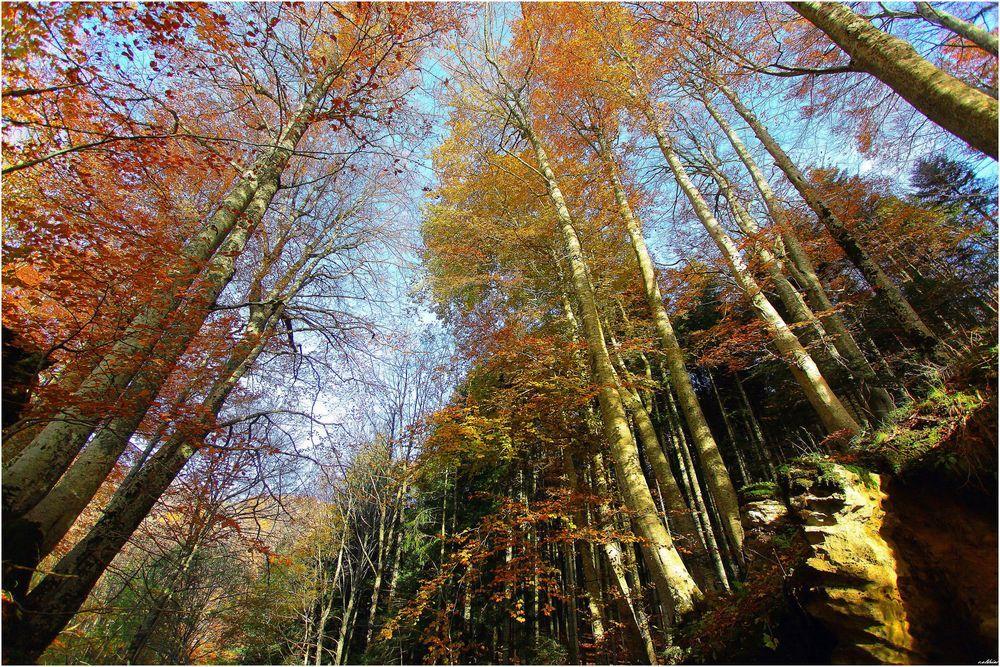 Foresta di La Verna di Claudio Oldrini