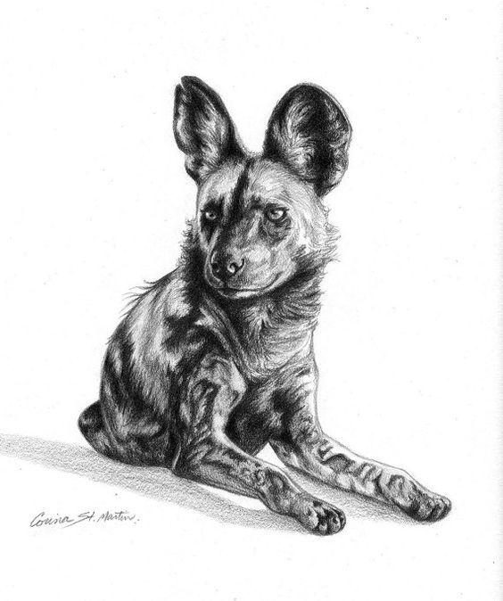 how to draw a wild dog