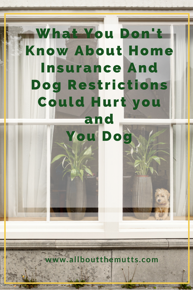 What Dog Lovers Need to Know about Home Insurance NOW ...