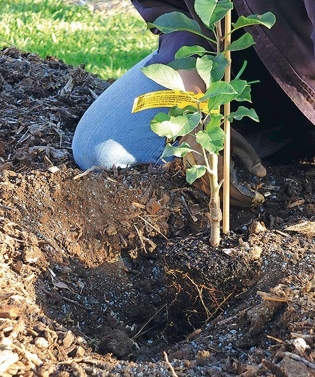Pin By Abc Organic Gardener Magazine On How To Organic Gardening Apple Tree Organic