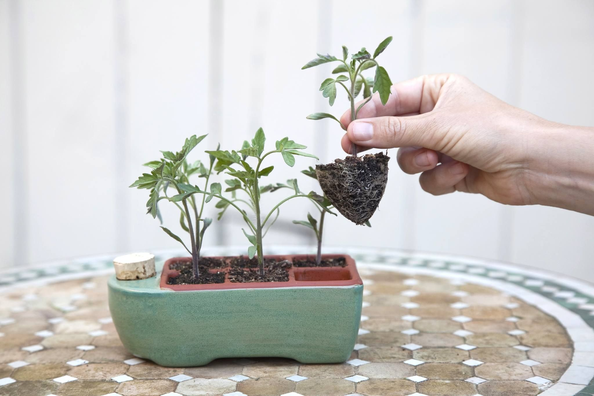Terra Cotta Self Watering Seed Starter By Orta Kitchen Garden Design Seed Starting Kits Seed Starter Seed Starting