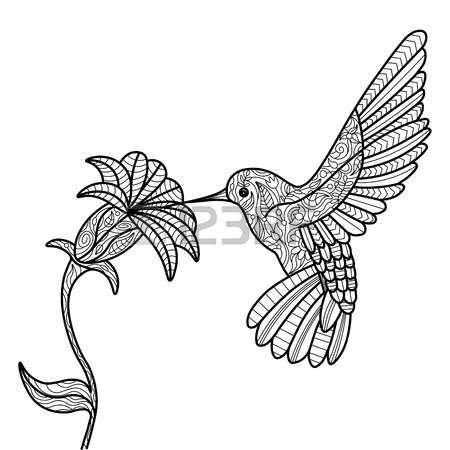 Colibrí y la flor para colorear libro para adultos ilustración ...