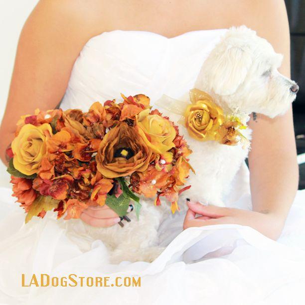 LADogStore.com #Dog #Collar #DogCollars #GoldCollars #Gold #WeddingDogCollars #UniqueDogCollars #UniqueCollars #RingPillow #Wedding #UniqueWedding #DogWedding #colorGold #CuteCollars #DogCollarIdeas #CollarIdeas #WeddingIdeas #Ideas #Accessory #WeddingAccessory #CollarAccessory #DogAccessorys #GoldDesign #GoldStuff #GoldParties #CuteWedding #AmazingDogCollars #Amazing #AmazingWedding #LADogStore #DogStore