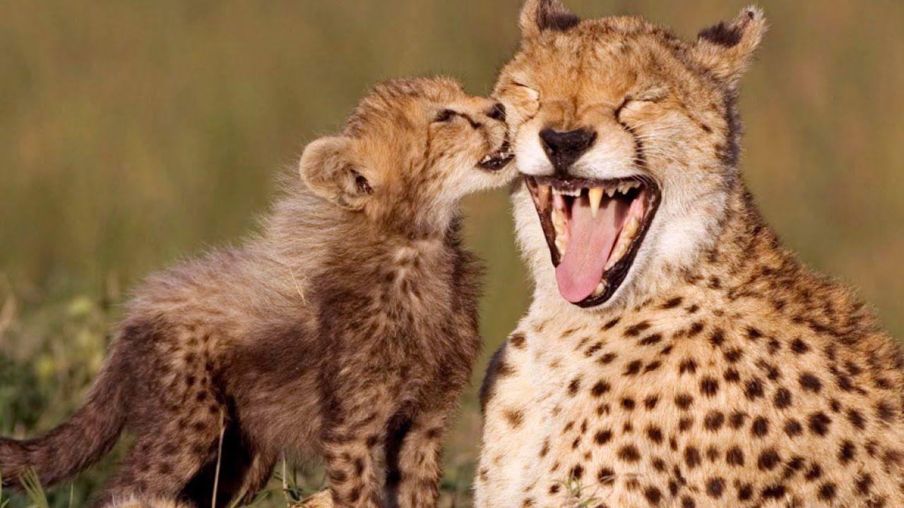 11+ Happiest animal on earth ideas