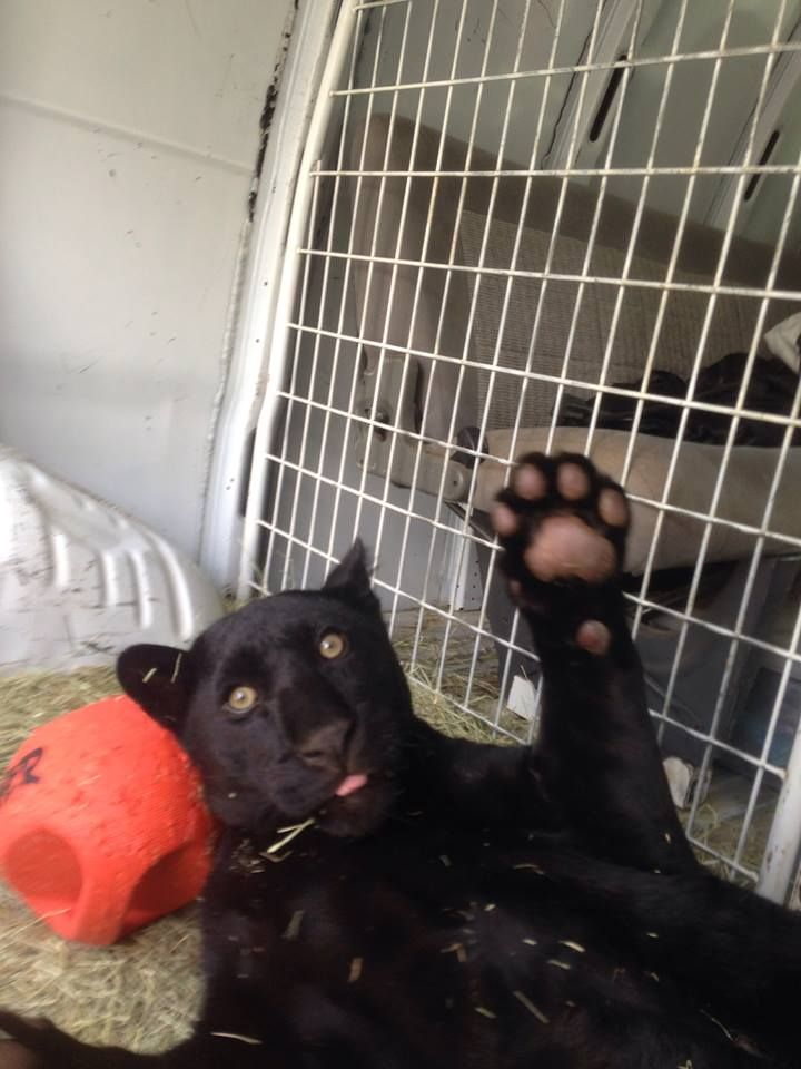 Nacho saying hello cats plastic laundry basket animals