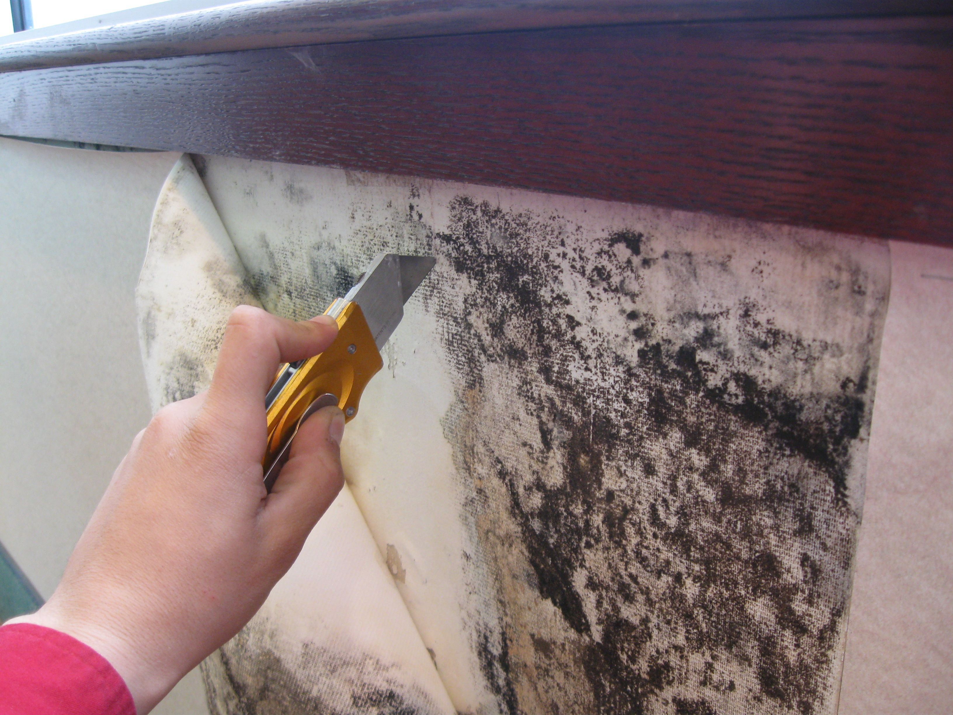 Molds In The Cabinet Water Damage Mold Remediation Molding