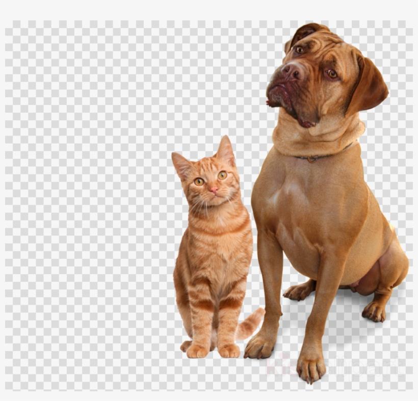 Pin By Vot Takaya Vot Elizabett On Videoredaktor Cats Animals Golden Retriever