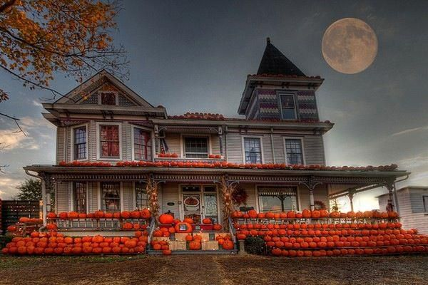 Thats alot of pumpkins ... this is why I want a house with land! I could have a pumpkin patch next go my vegetable garden!
