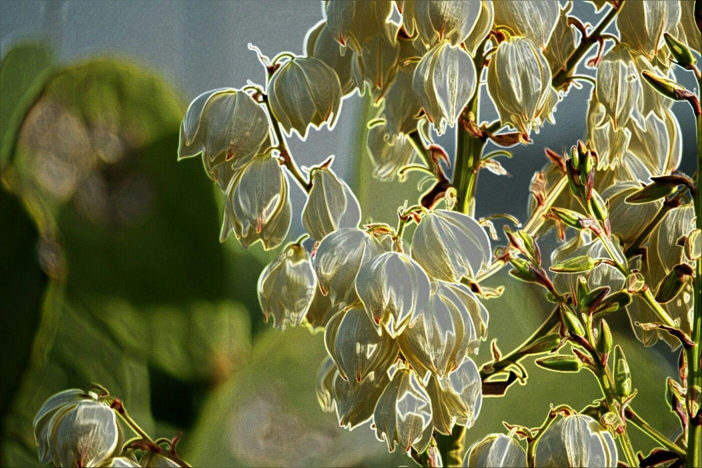Unas flores que me gustan | Mis fotos editadas | Pinterest | Me gustas