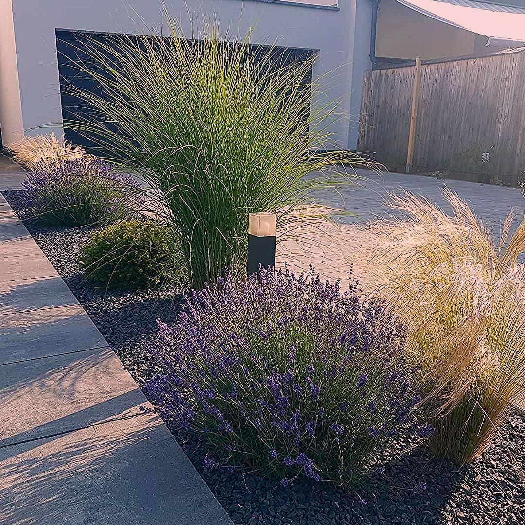 Photo of So schön kann der Tag beginnen ? . Diese Gräser und den Lavendel habe ich v… – Best Blog – My Blog