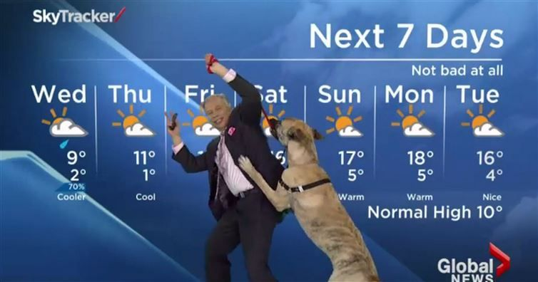 Ripple The Dog Has No Concern For This Weatherman S Forecast