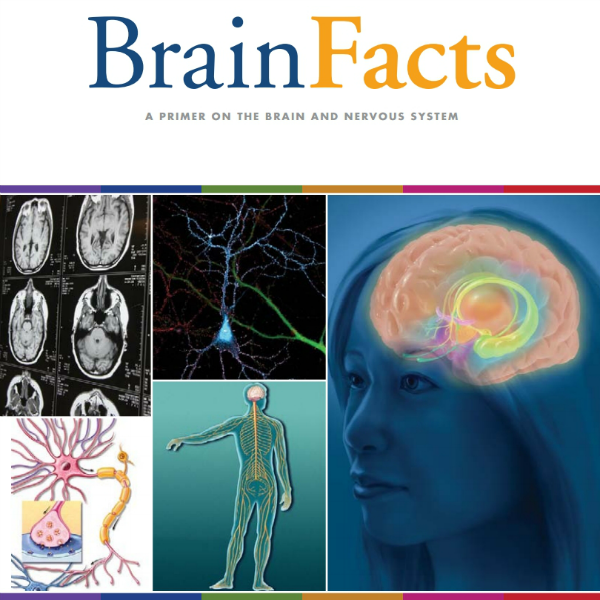 Science Facts Brain: Pin By All About Psychology On Psychology Students