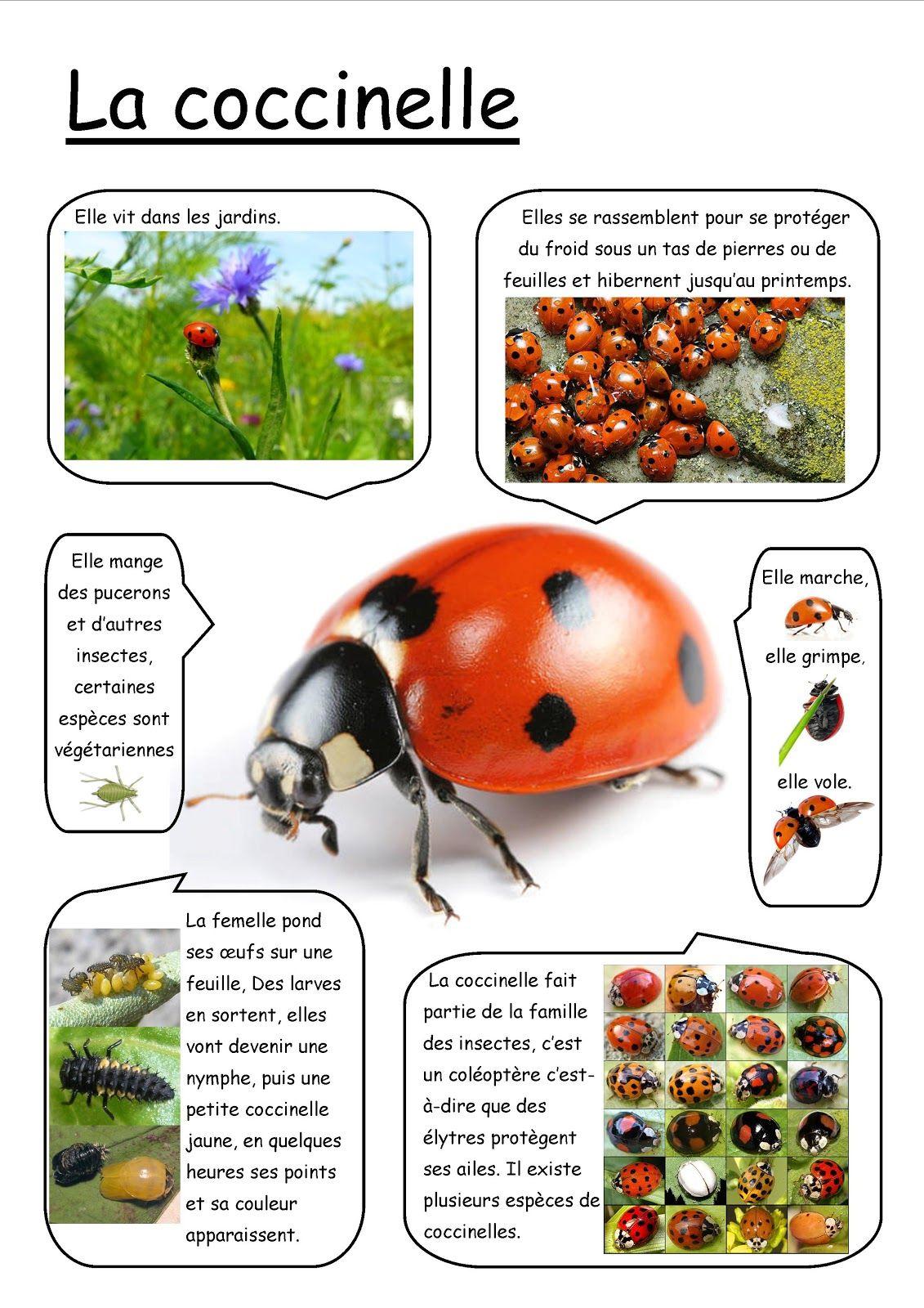 Pin De Ale Perez En Insect Aprender Frances Idioma Frances