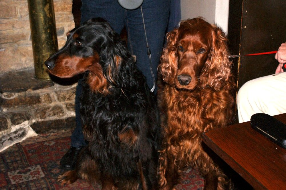Amber the Gordon Setter and Ruby the Red Setter have been