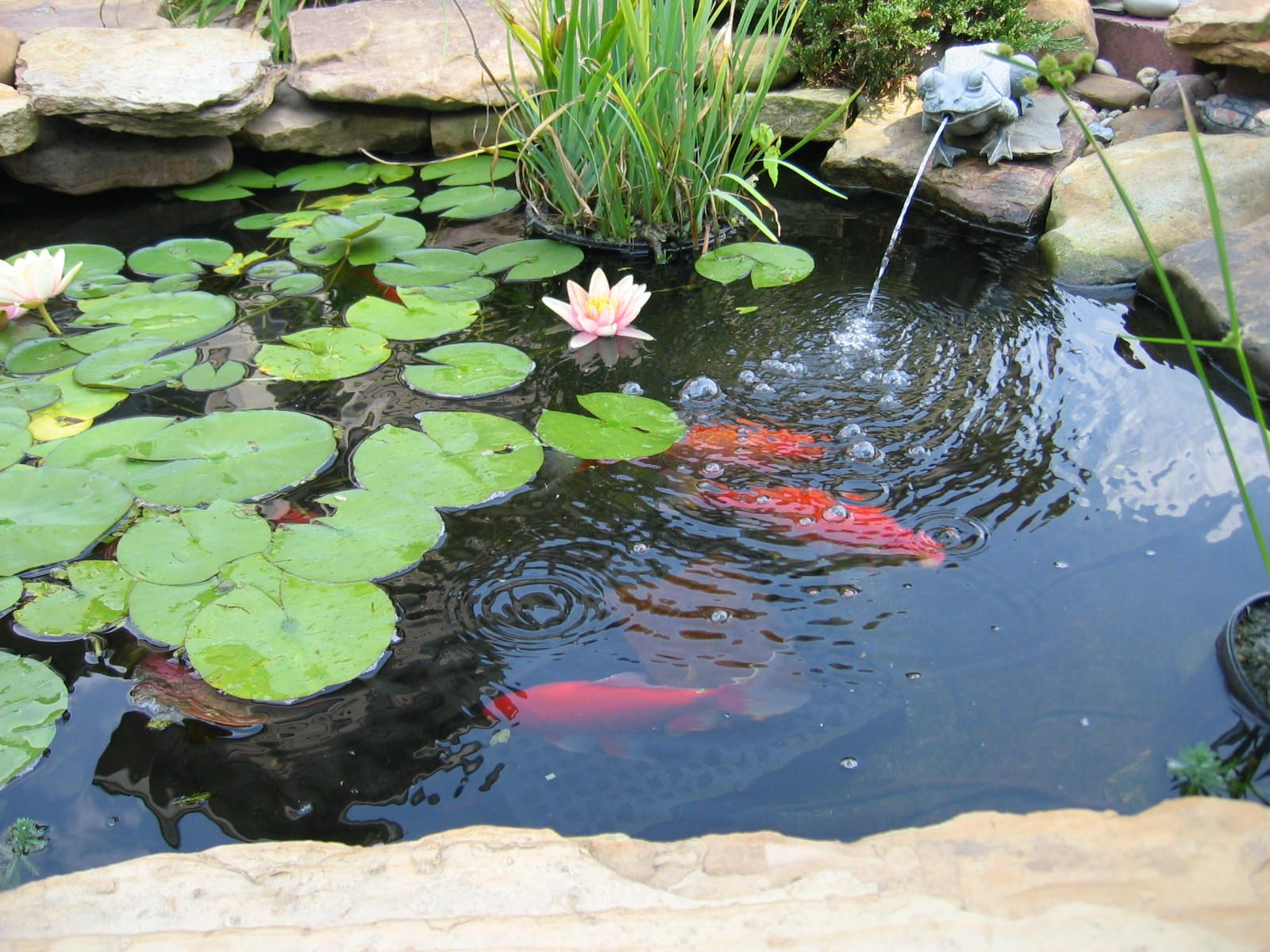 Ideas for garden pond water features ideas with small for Fish pond materials