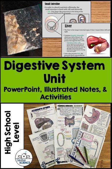 Digestive System Unit   Digestive system, Digestive system ...