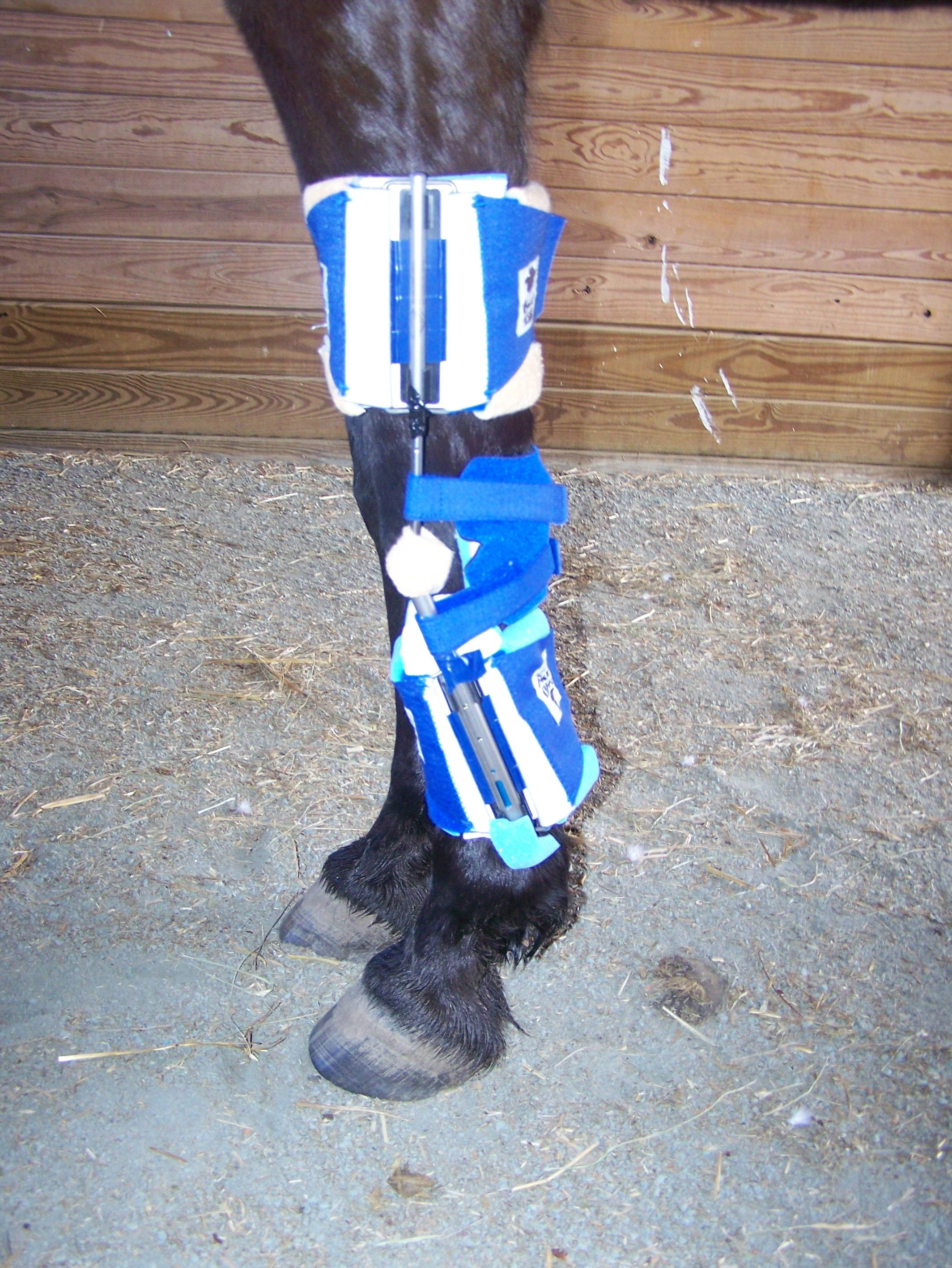 Horse equine physical therapy - Our Dynamic Splints For Horses Allow Veterinarians To Rehabilitate Equine Joints And Muscles More Effectively Than Physical Therapy Alone