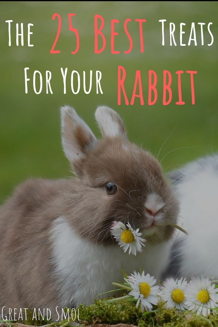 Everyone wants to spoil their pet with special treats. Find out the best rabbit treats to give for health and happiness. via @www.pinterest.com/greatandsmol
