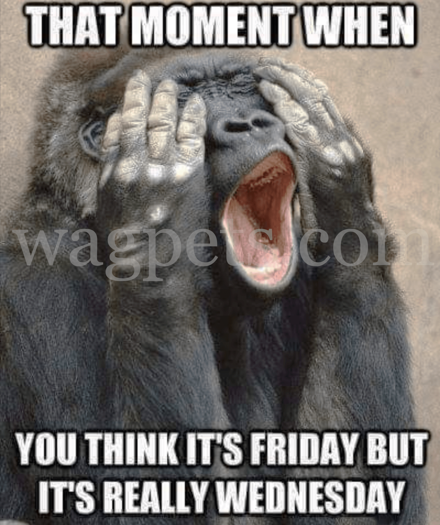 That Moment When You Think It S Friday But It S Really Wednesday Funny Good Morning Memes Work Quotes Funny Morning Quotes Funny