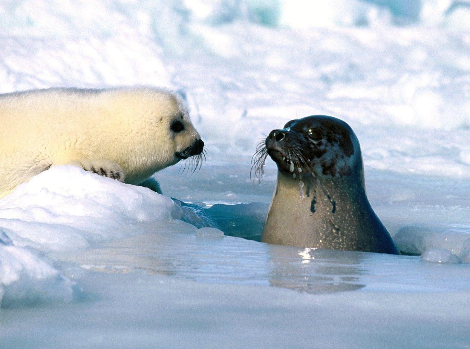Arctic Ocean Animals