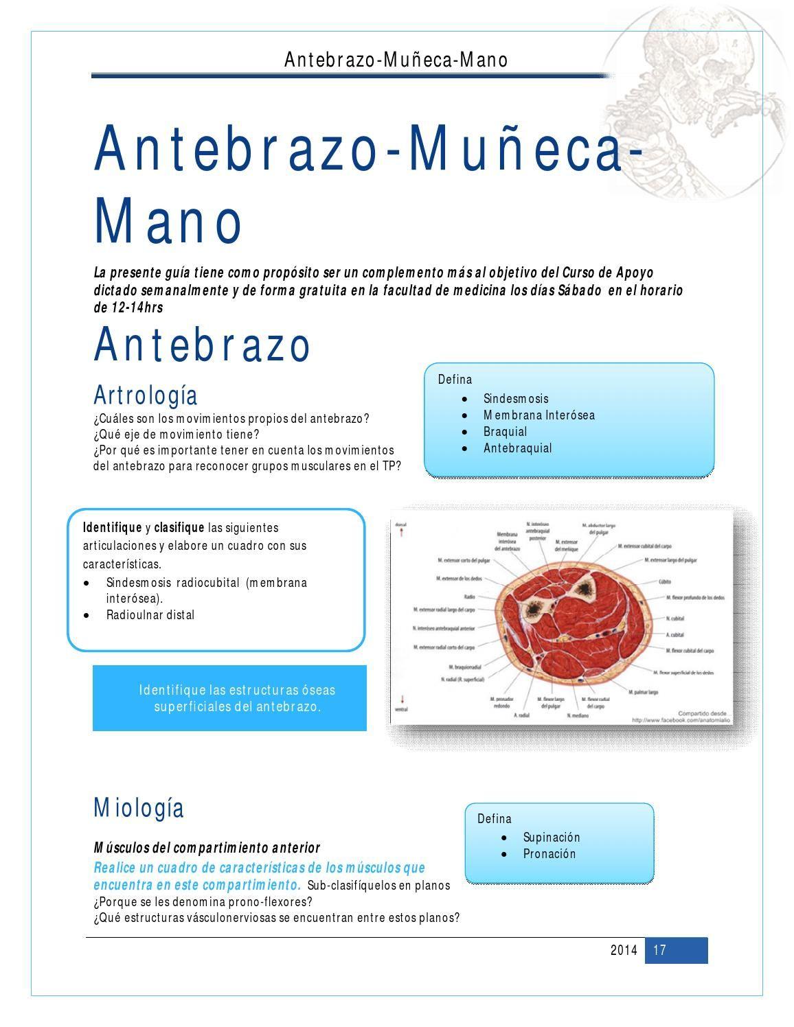 Antebrazo-Muñeca-Mano Cat1 | Pinterest | Anatomía y Muñecas