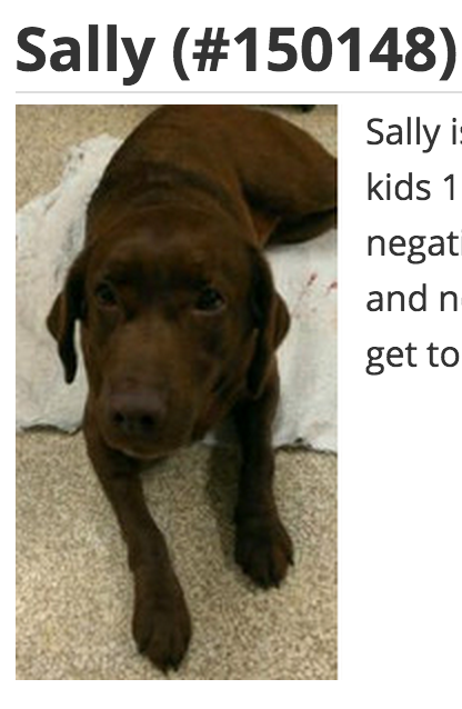 Sally Is A 2 Year Old Chocolate Spayed Female She Weighs 73 Pounds And Is Approved For Kids 10 And Up Sally Must Go To A Home Dog Adoption Dogs Animal Help