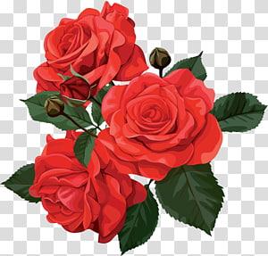 Rose Png646 Png 2838 2800 Flower Bouquet Png Rose Flower Png Flower Images