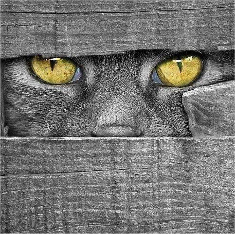 ✯ Grey on Grey with Captivating Eyes✯