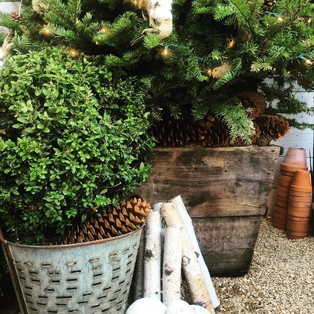 Pretty little garden vignette at the garden studio #cottage #christmas2015 #details #naturespalette #natural #california